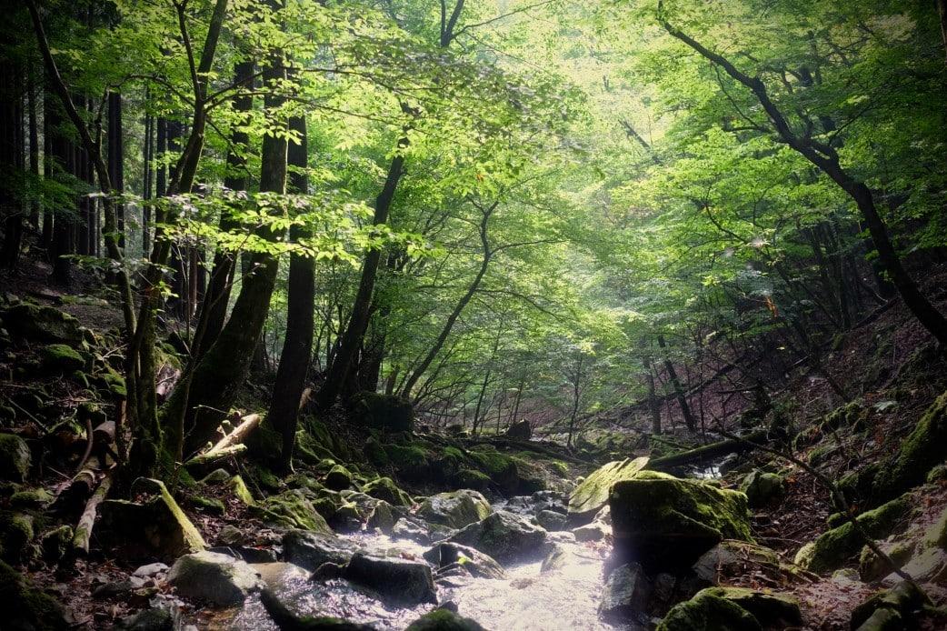 Daibosatsu Forest