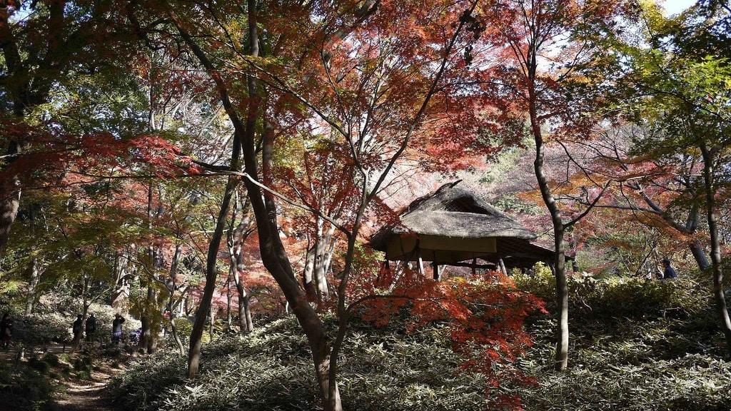 Tsutsuji-chaya