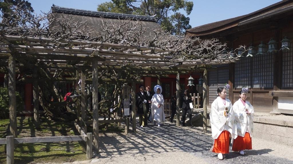 Kasuga Taisha Wedding