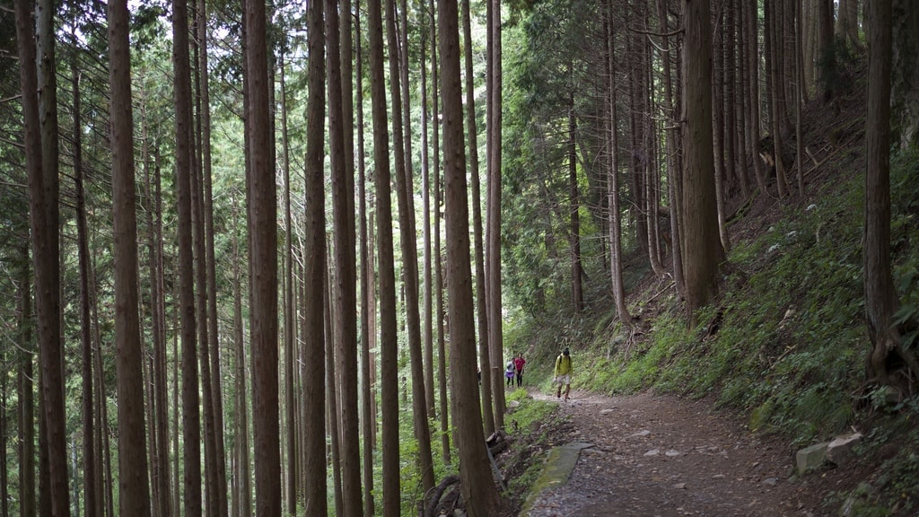 Mount Mitake Forest