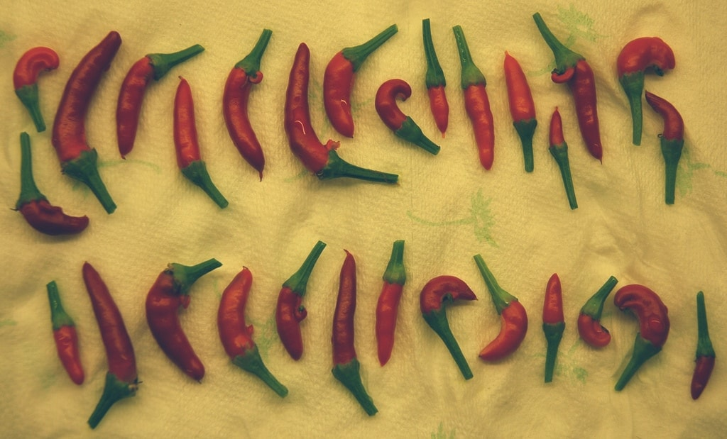 Mudchute Chillies!