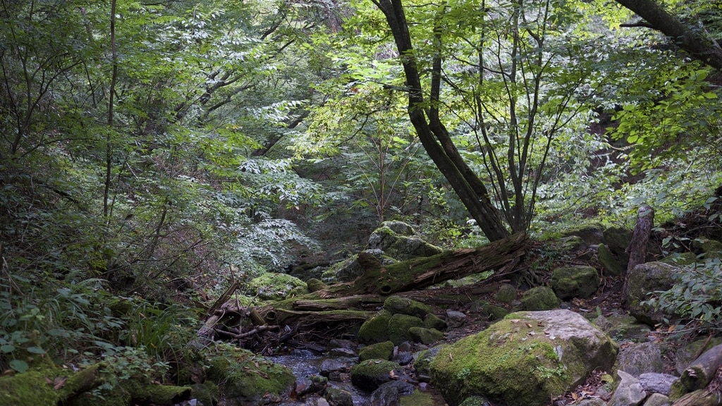 Mount Mitake Rock Garden