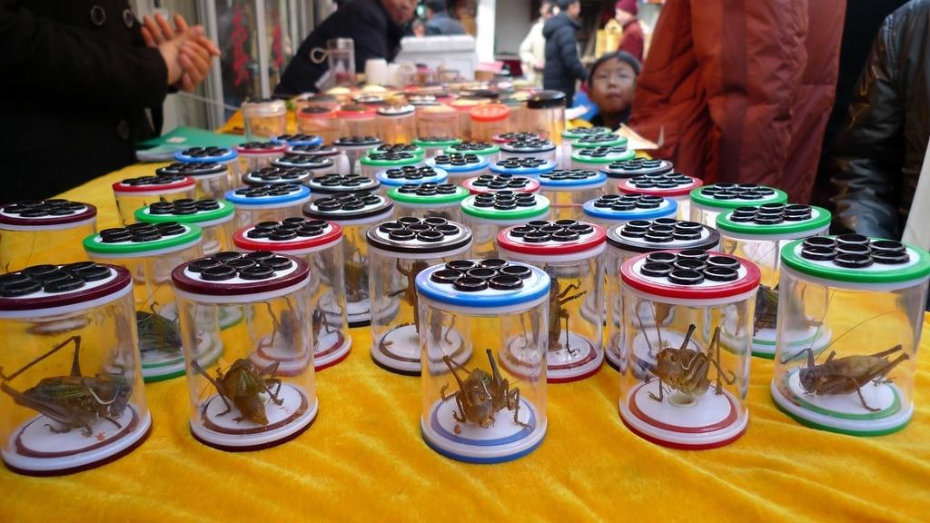 Crickets in Jars