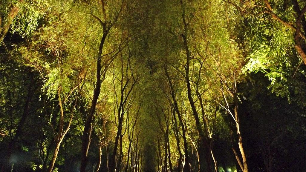 Green Avenues