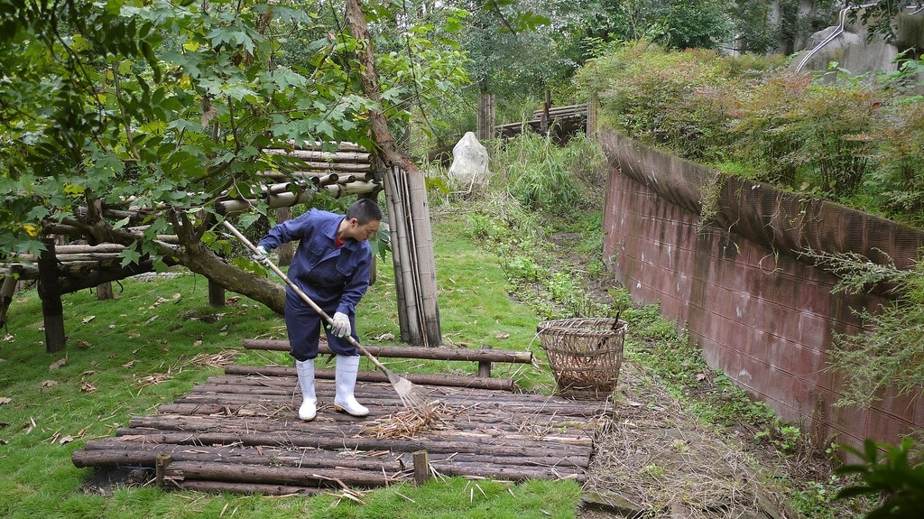 Cleaning Panda Pen