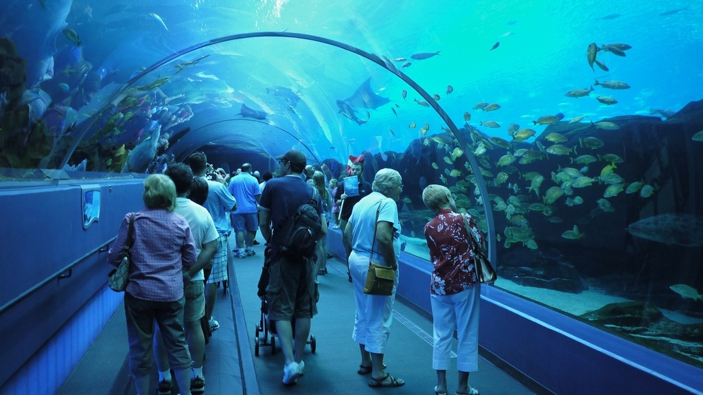 Georgia Aquarium Acrylic Tunnel