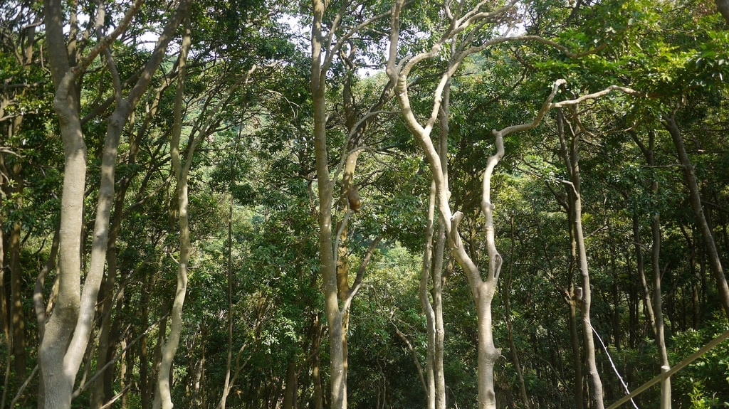 Monkey Treetops