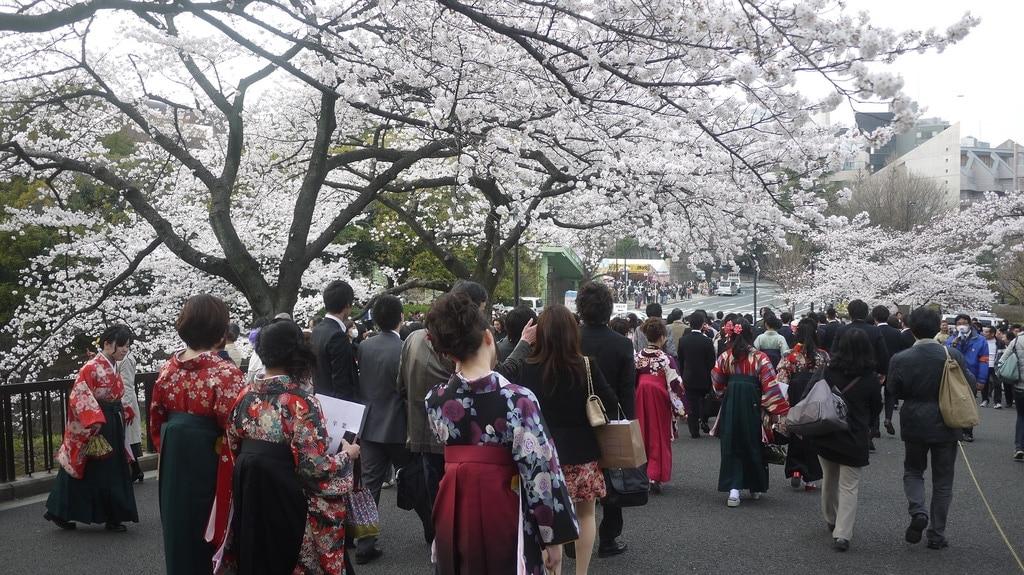 Underneath the Hanami Trees