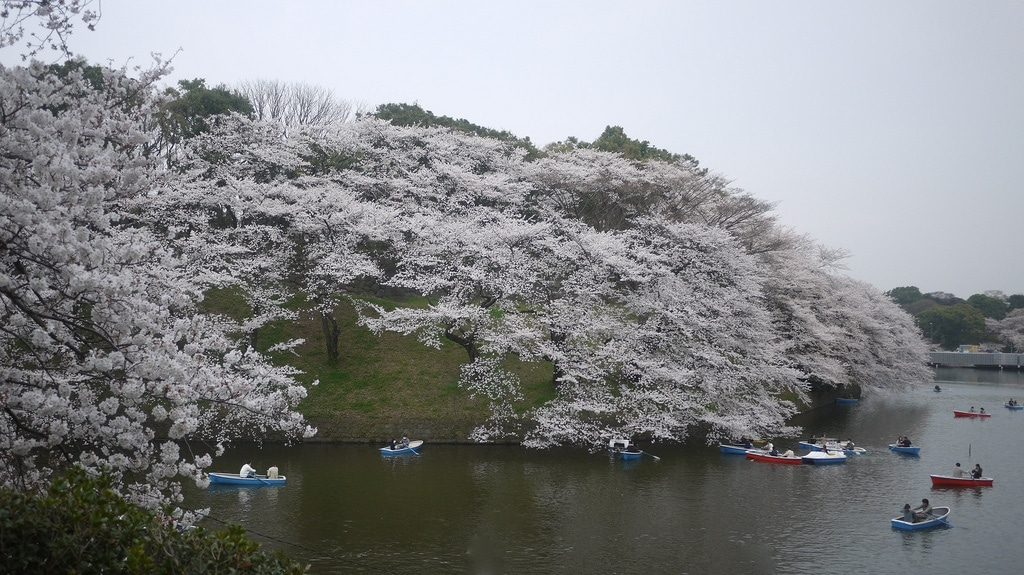 Sakura Boating