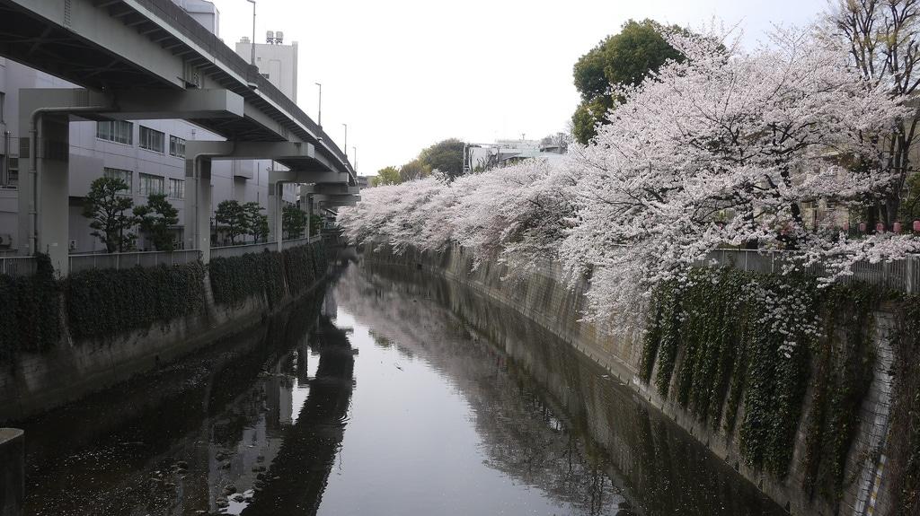 Kanda River Hanami