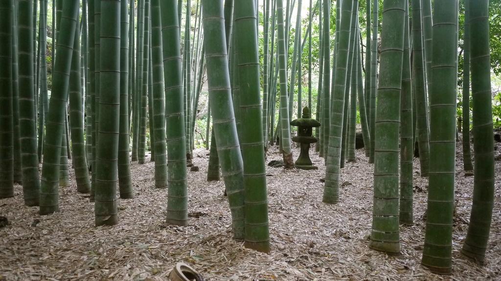Hokoku-ji-Bamboo Groove