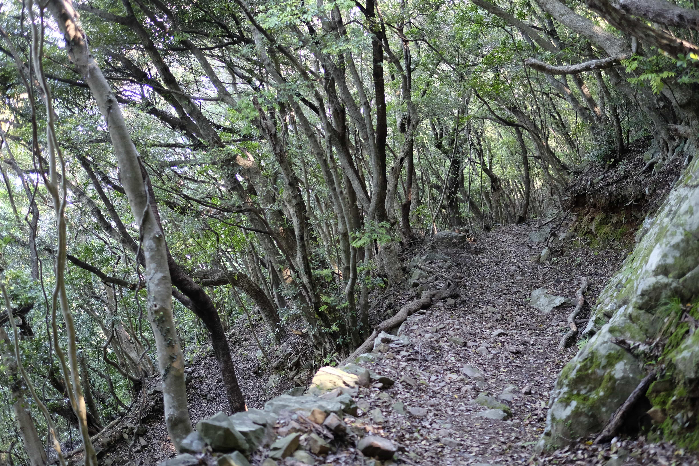 Kongōchō-ji woods