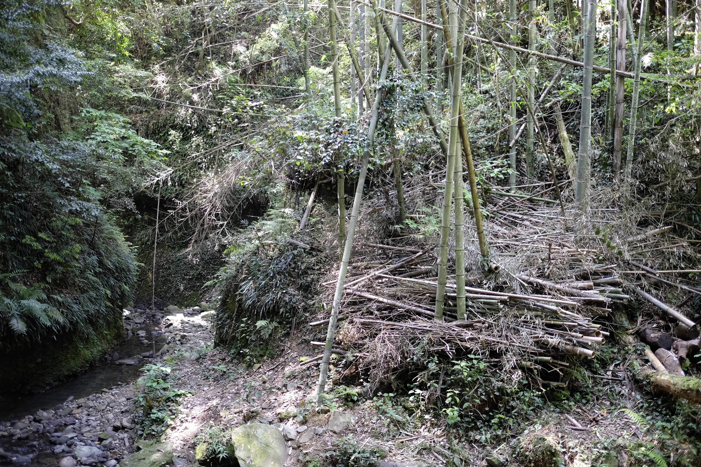 Iokidō Cave Bamboo