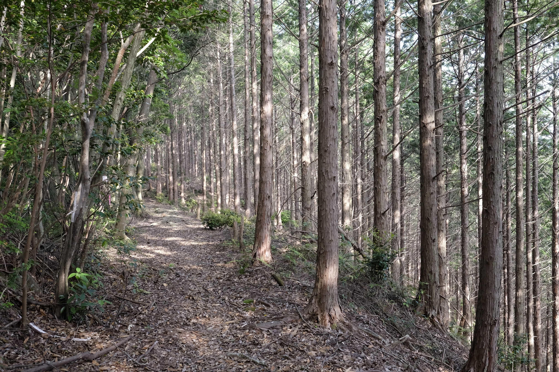 Soemimizu Henro Trail