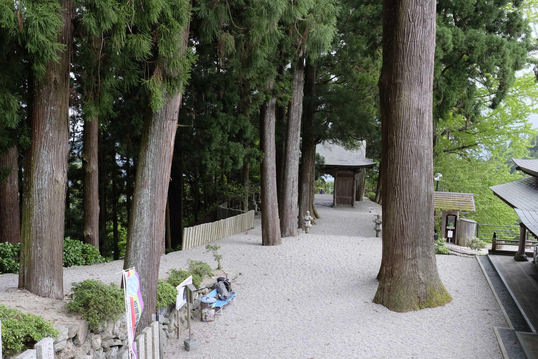 Shōsan-ji cedar trees