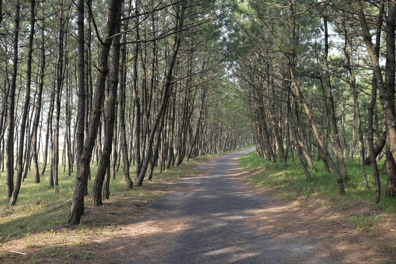 Irino Pine Coast
