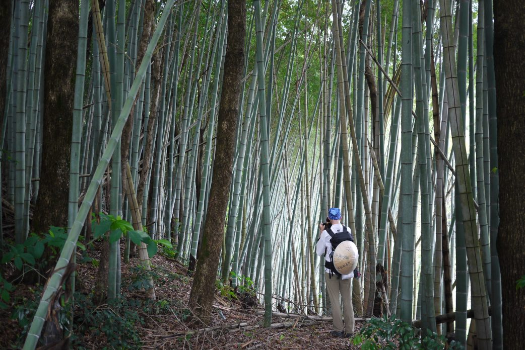 Photographing bamboo forest