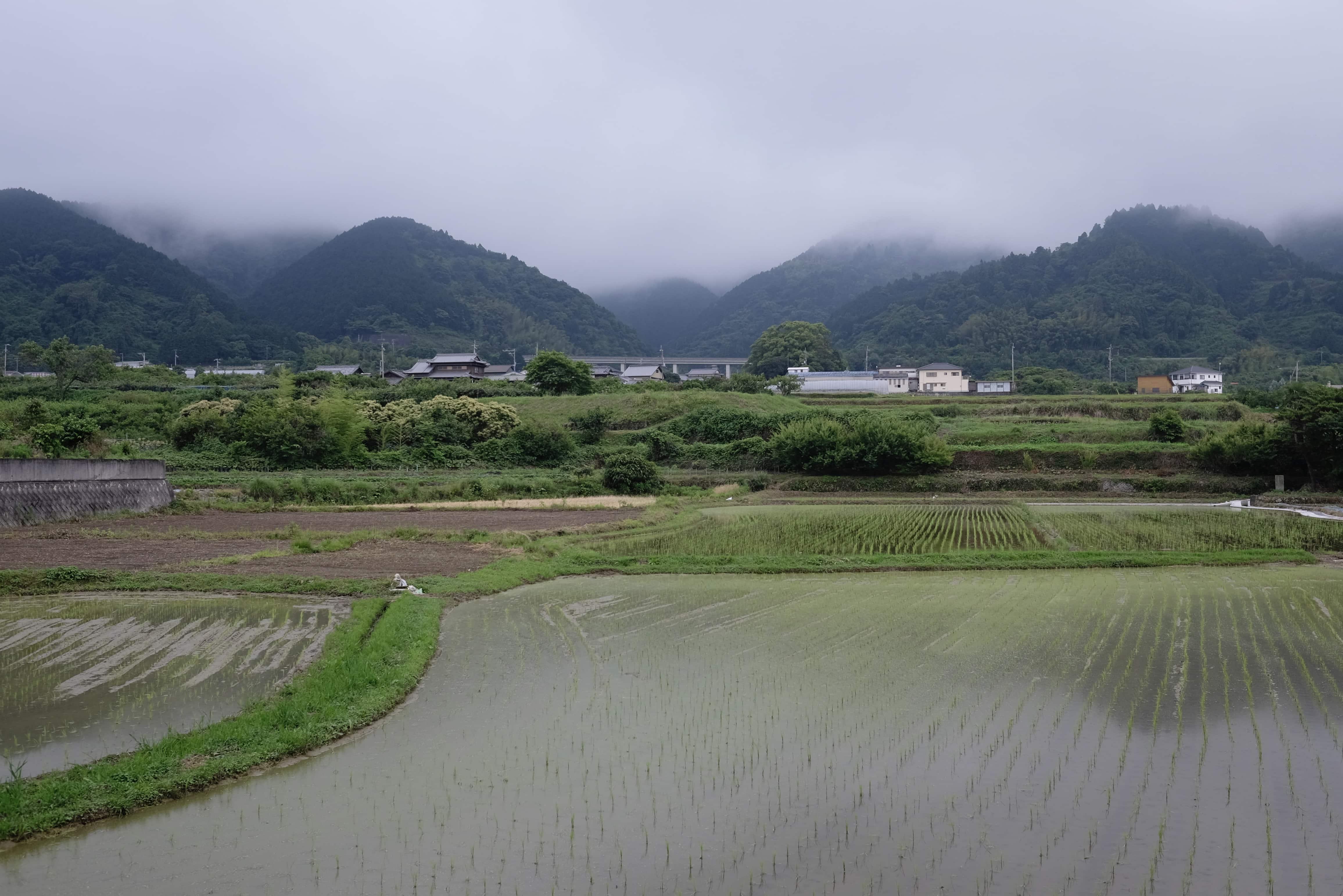 Naranoki