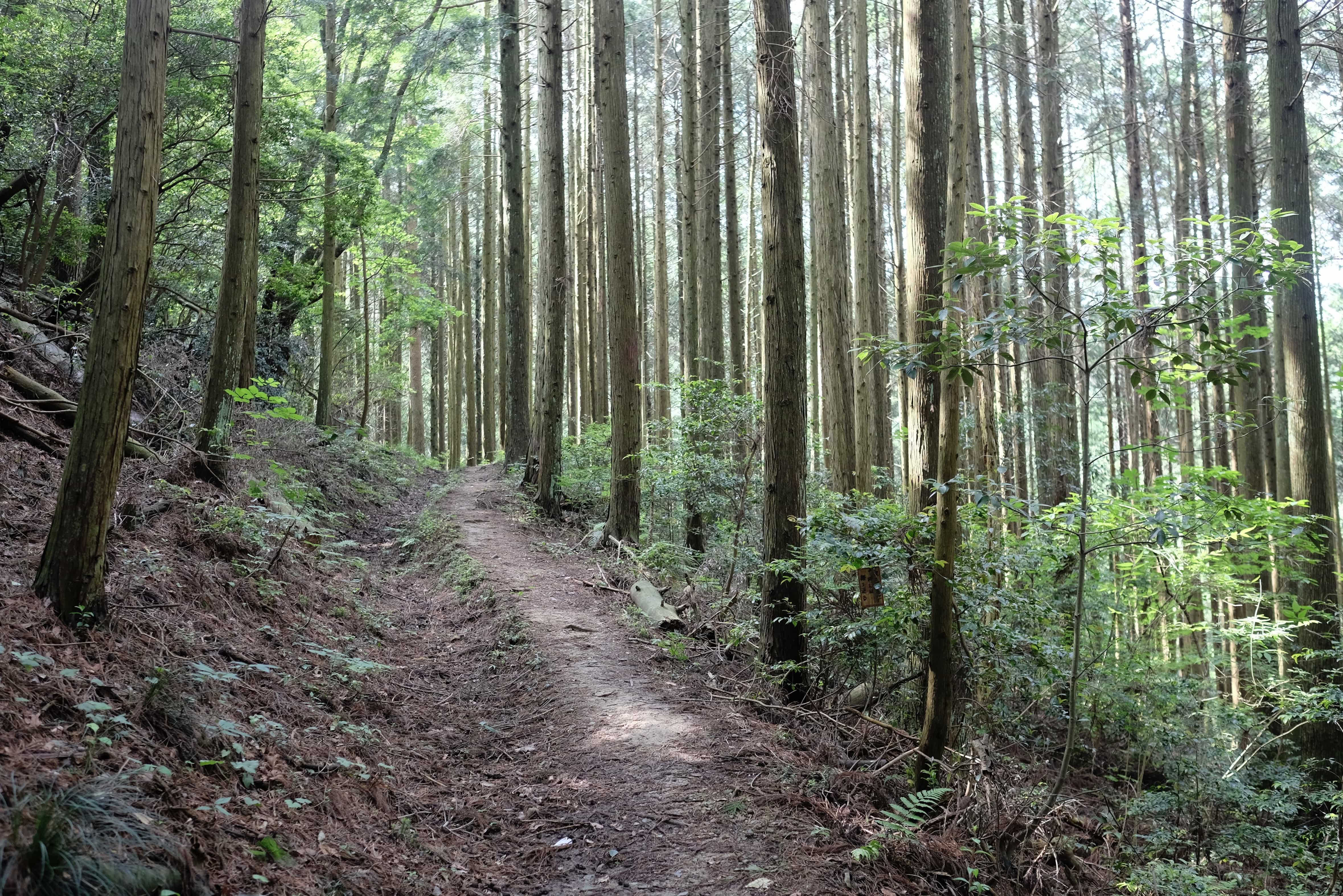 Sano Trail