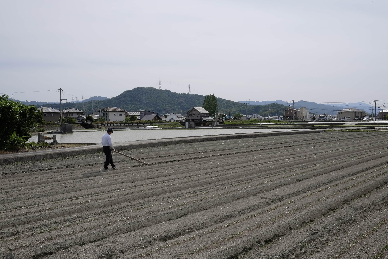 Man ploughing field