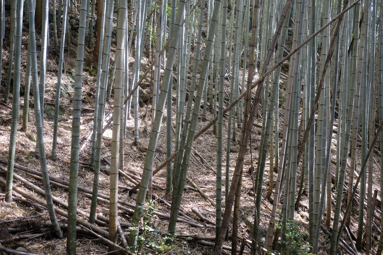 Bamboo overload
