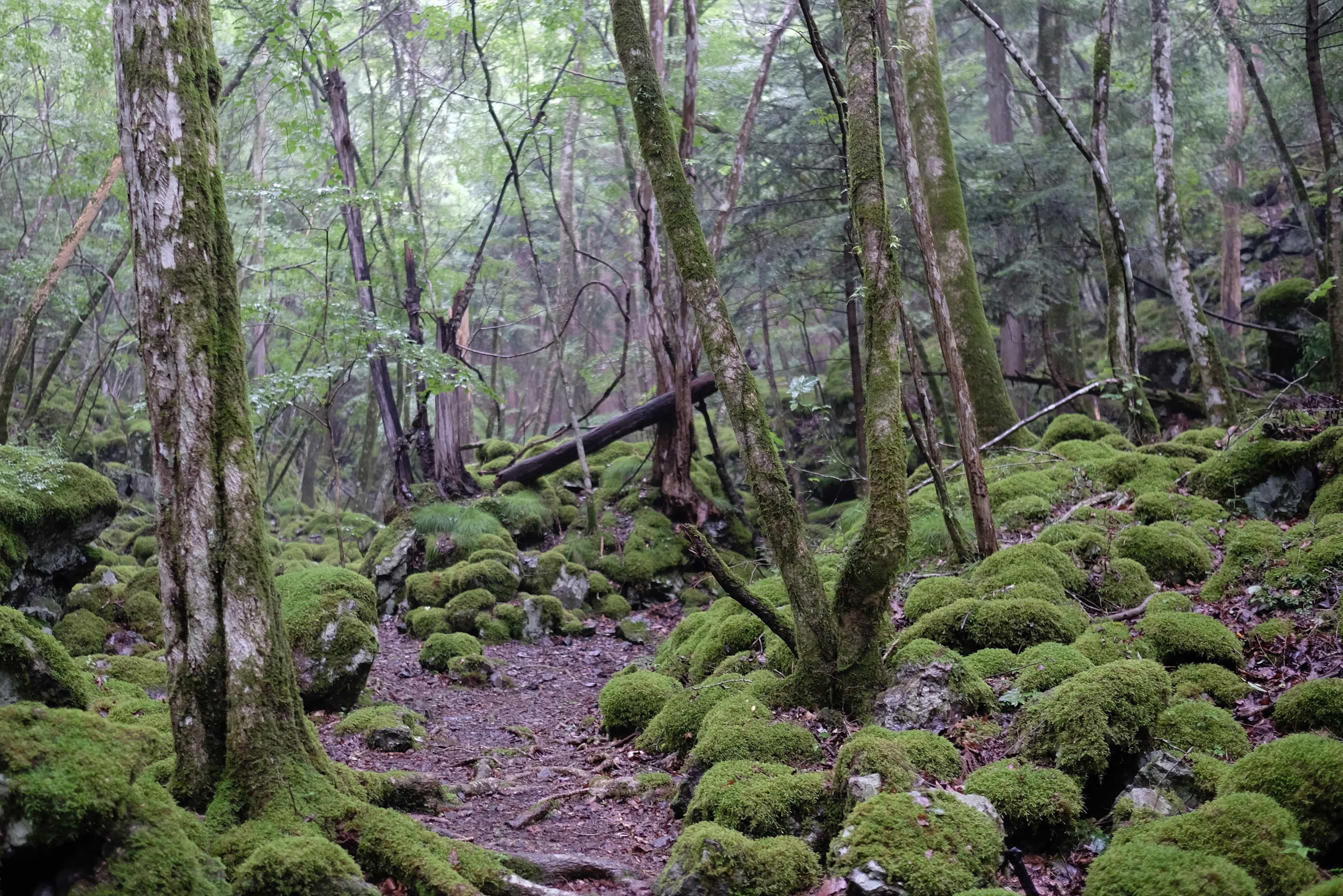 Mt. Yamainudake (山犬嶽)
