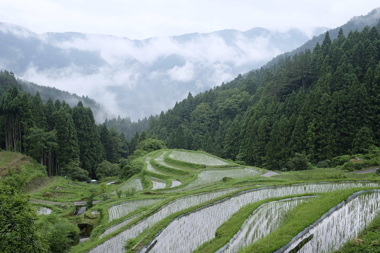Kashihara no Tanada (樫原の棚田)