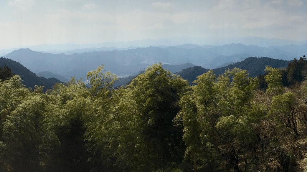 Koburi Pass Bamboo Forest