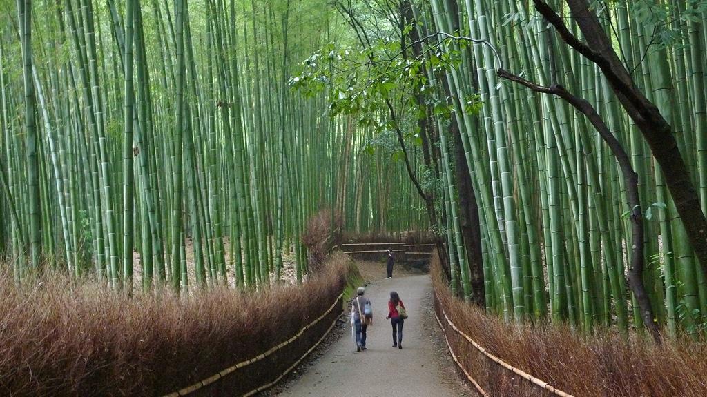 Arashiyama (嵐山) Tenryū-ji (天龍寺) Temple, Garden, and Bamboo