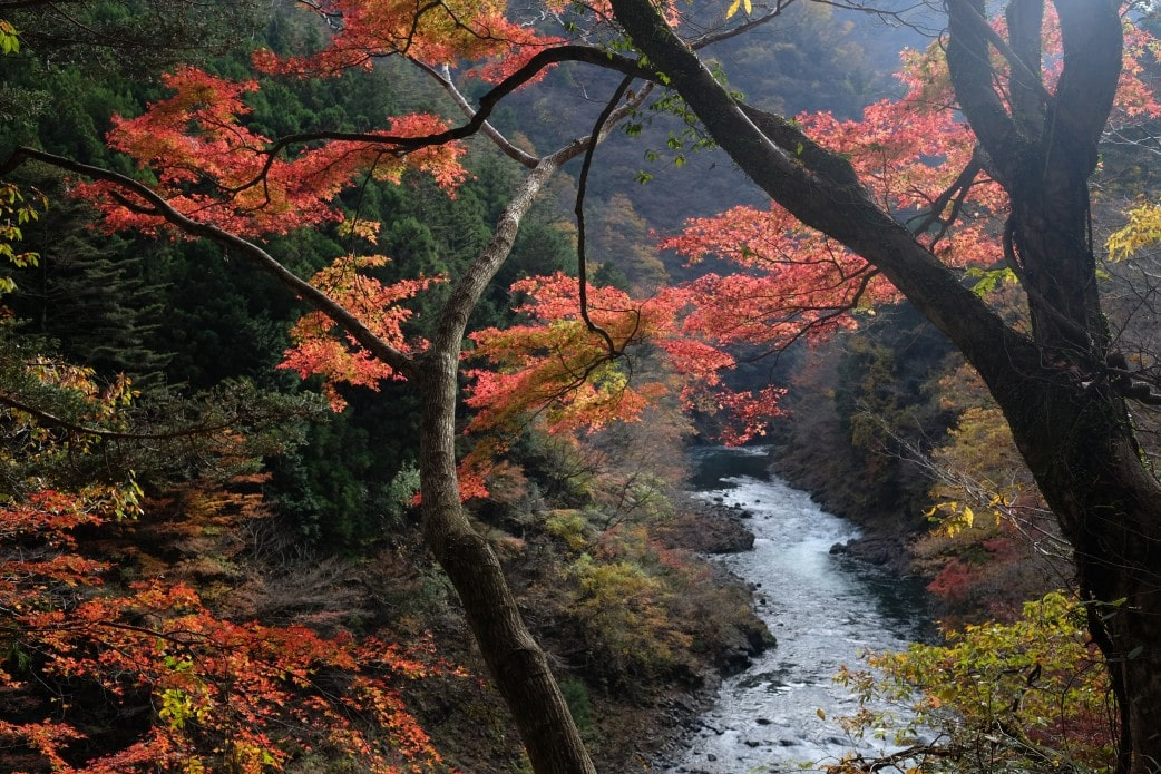 Okutama Autumn Leaves