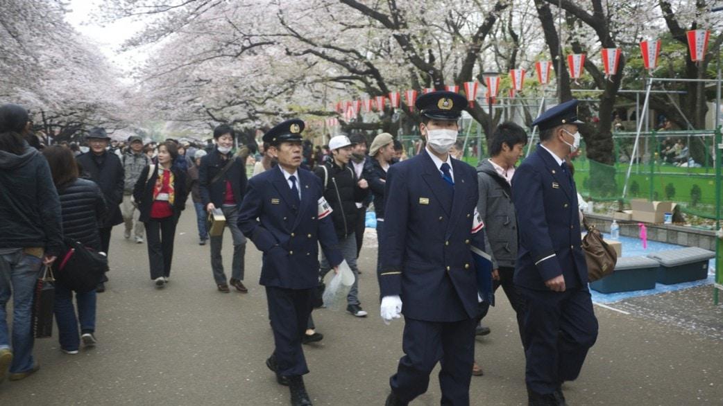 Sakura in Ueno Park